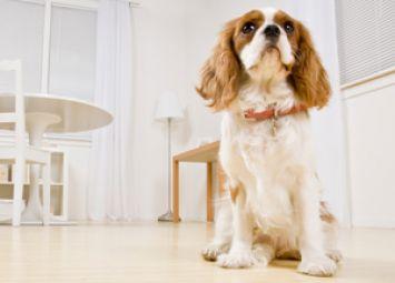 5 Tips for Your New Dog's First Day | Glen Iris Vet