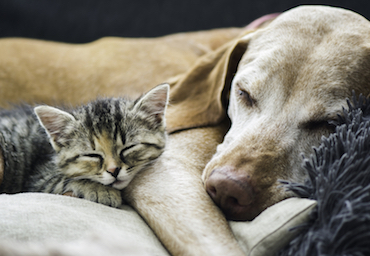 Keeping Your Pet Safe During Fireworks | Glen Iris Vet