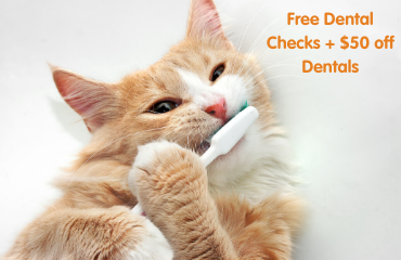 FREE Dental Checks + $50 Off any Dental Treatments + Food Discount | At the Glen Iris Vet