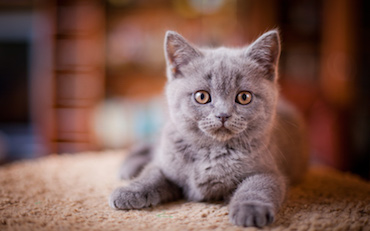 Bringing Your Kitten Home | Glen Iris Vet