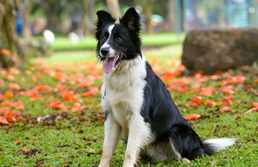 Importance of Blood Analysis for our Pets | Glen Iris Vet