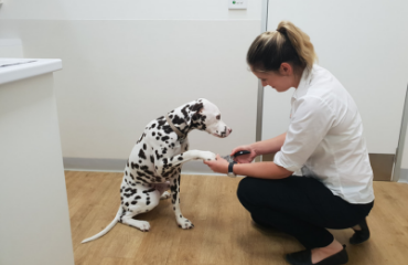 Why Dogs' Nails Need to be Trimmed | Glen Iris Vet