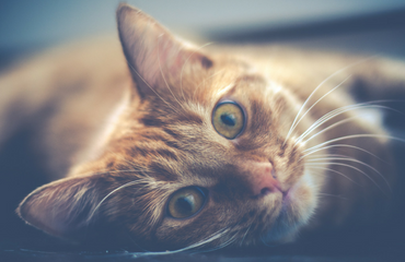 Kidney Disease in Cats | Glen Iris Vet