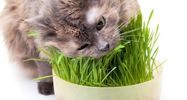 Why Do Cats Eat Grass? | Glen Iris Vet