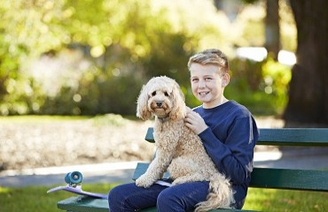 Summer Health Tips for Your Dog | Glen Iris Vet