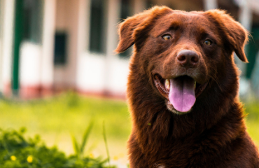 Tips For Keeping Your Pet Cool Over Summer | Glen Iris Vet